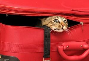 кот_в_чемодане